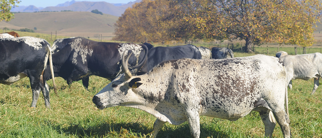 RPO sketches drought scenarios for red meat industry