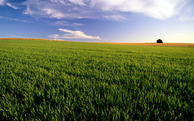 Agriculture the best performer in a struggling economy IOL - Nehru Pillay