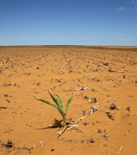 AgriSA to discuss mismanagement of drought funds with AG EWN - Mia Lindeque