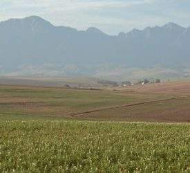 Agricultural land holdings bill won't have a positive impact EWN - Mia Lindeque