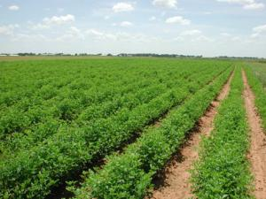 Agriculture the beacon of hope for South African economy: economists eNCA