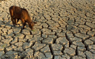 Farmer suicides soar as worst drought in decades drives them to ruin Business Live - Katherine Child