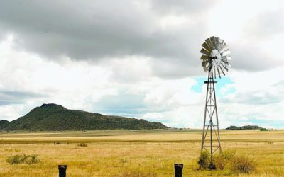 Agri SA economist warns on farm grabs Business Day - Bekezela Phakathi