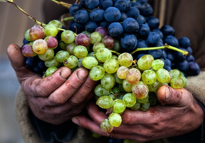 SA wine grape harvest excels despite drought Cape Business News -  Super User