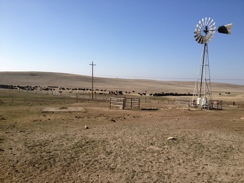 Drought-stricken Northern Cape farmers reducing herds Farmer's Weekly - Annelie Coleman