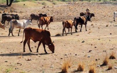 'Water-guzzling' farmers deserve our respect Fin24 - Mandi Smallhorne