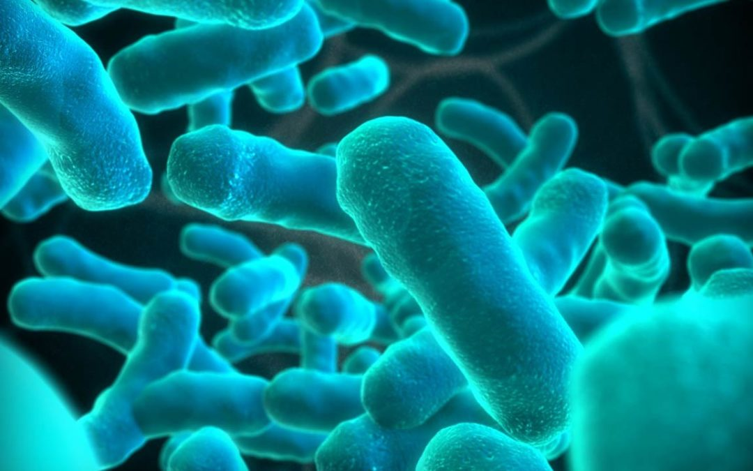 Effects of Listeria outbreak on farming not known – AGRISA EWN - Kgomotso Modise