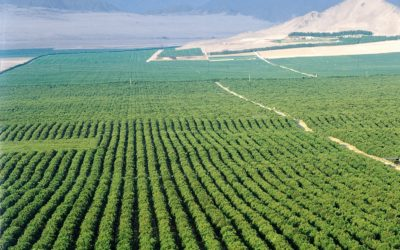 Agriculture grows 17.7% after droughts IOL - Luyolo Mkentane