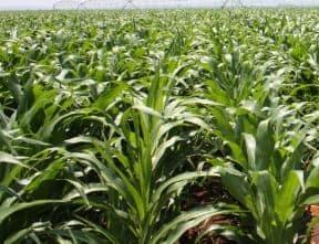 Só lyk die jongste oesskatting Pro Agri - Bron - Oesskattingskomitee