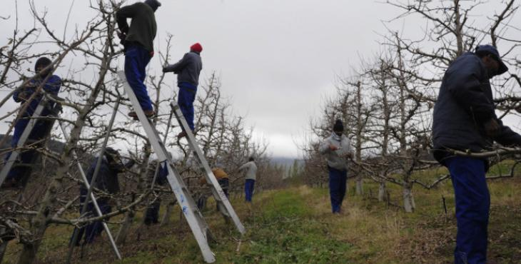 SA farmers look to Africa IOL - Oscar Nkala