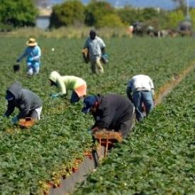 Agri Noord Kaap - Landbou soek geskoolde arbeid