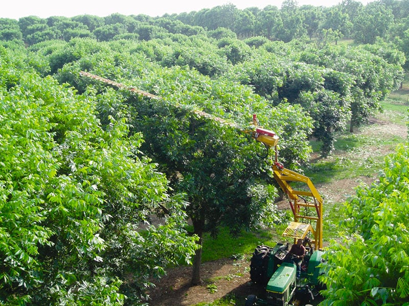Agri Noord Kaap - Mechanising pecan production