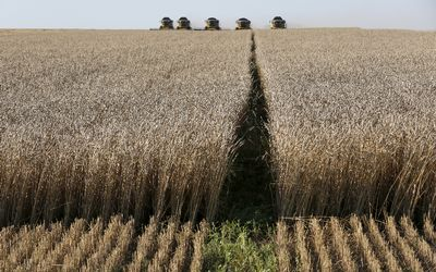 Agri Noordkaap - Wheat crop plummets 18% owing to drought