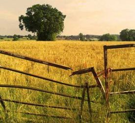 Rural safety enjoys high-level attention Politics Web