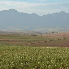 Agri Noord Kaap - Winterreën bring hoop, voerkrisis dreig