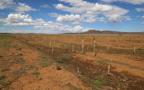 Agri Noord Kaap - AGRI SA WARNS FOOD SECURITY AT RISK