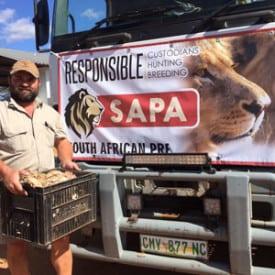 Agri Noord Kaap - Leeutelers kom tot maer leeus se redding