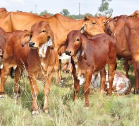 Implementing a holistic grazing management plan Farmer's Weekly - Annelie Coleman