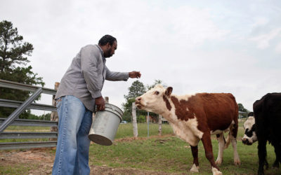 Farmers say stock theft on the rise sowetanlive.co.za - Mpho Sibanyoni