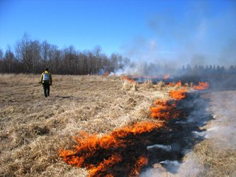 Voer dringend benodig na veldbrand by Calvinia ProAgri