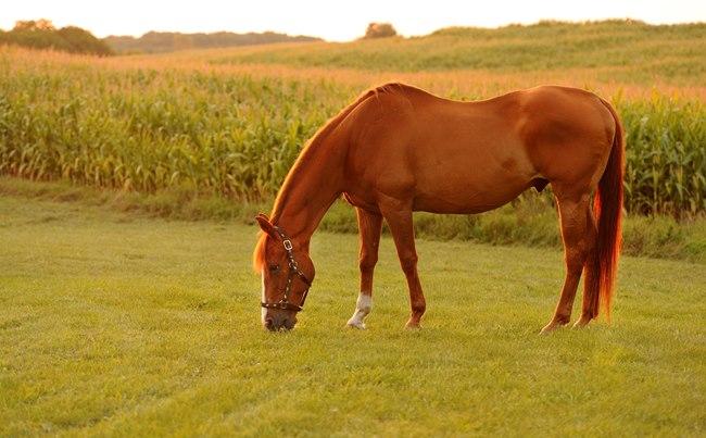 Suspected case of horse sickness prompts quarantine SABC - Neo Bodumela