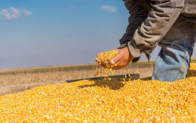Update on agricultural commodity markets Bizcommunity - Wandile Sihlobo