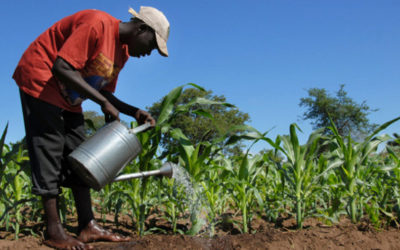 Zambia provides opportunity for SA agri investment ENCA