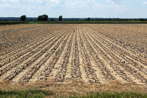 A letter to farmers in drought-stricken regions Farmer's Weekly - Denene Erasmus