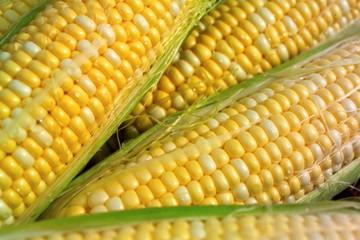 SA raises corn-crop forecast to biggest in 36 years Bloomberg - Thembisile Dzonzi