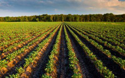 Who owns the land? Politics Web - Theuns Eloff