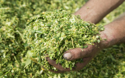 Expert tips on producing better silage Farmer's Weekly - Lloyd Phillips