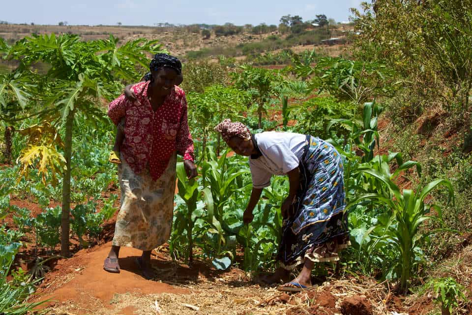Transforming the agricultural sector Money Web - Dr Klaus Eckstein