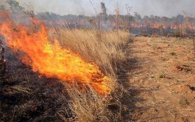 Farmers lose millions as fire ravages Northern Cape farms IOL - Sandi Kwon Hoo