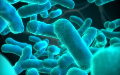 Effects of Listeria outbreak on farming not known – AGRISA EWN - Kgomotso Modise