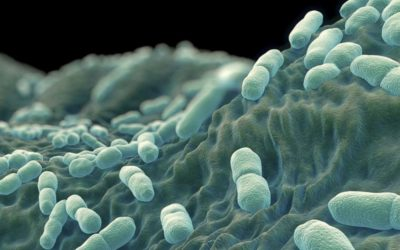 Despite listeriosis outbreak, our food is safe IOL - James Mahokwae