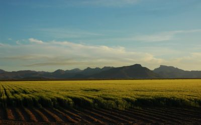 Agricultural stocks could buffer against high food inflation – economist News24 - Carin Smith