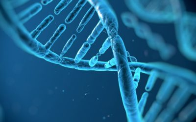 Genetic tweak makes plants use 25% less water Times Live