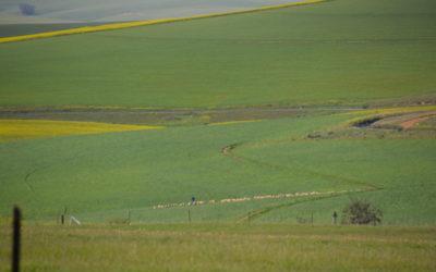 Strong opposition to expropriation at Grain SA congress Farmer's Weekly - Sabrina Dean