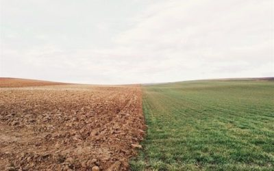 Report: South Africa's grim agricultural outlook Shared via bizcommunity.com