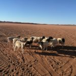 Agri Northern Cape Drought