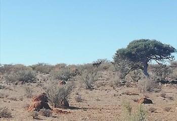 LANDBOU-PODCAST: Agri Noord-Kaap reik uit na plaaswerkers OFM