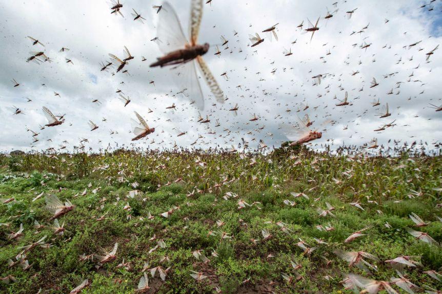 Agri Noord-Kaap | Sprinkaan