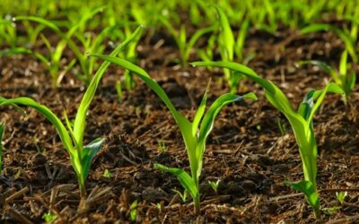 Five fundamentals for sustainable agricultural business Bizcommunity